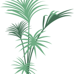 Palm graphic_1