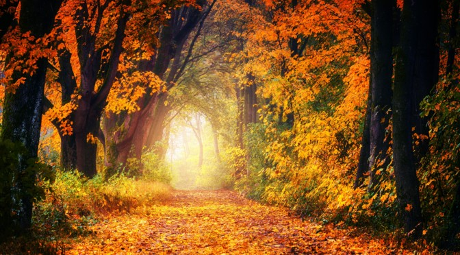 Herbstszene